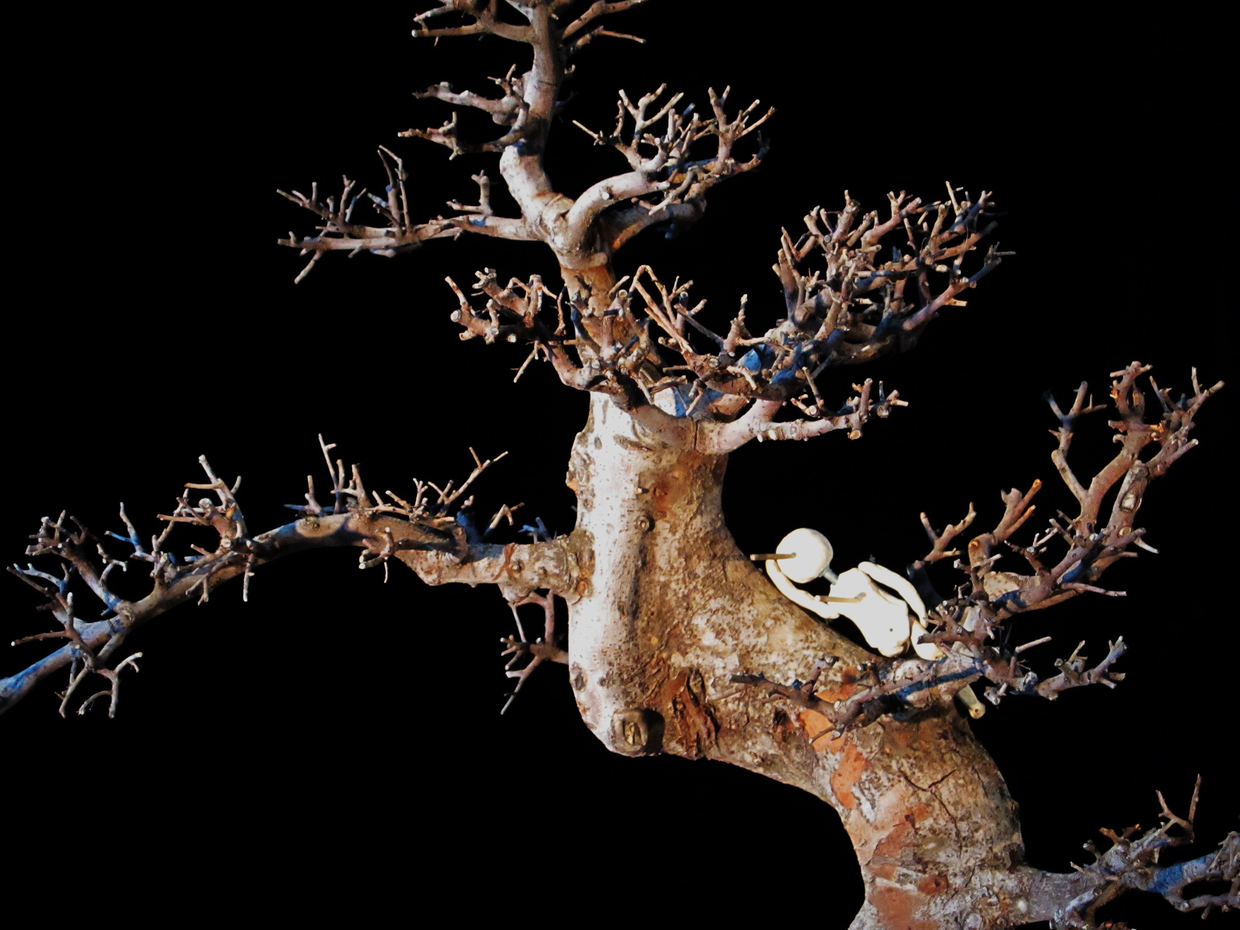L'arbreViaVerde3